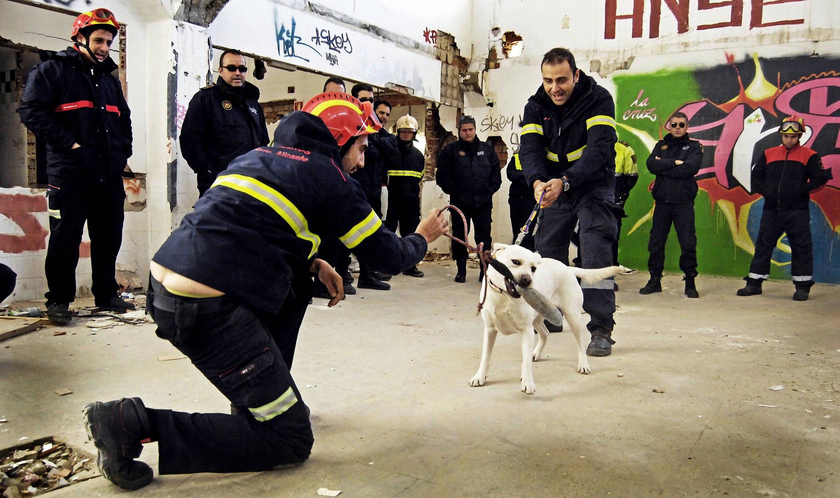 Prácticas con animales de policía y bomberos en un curso básico de guías caninos