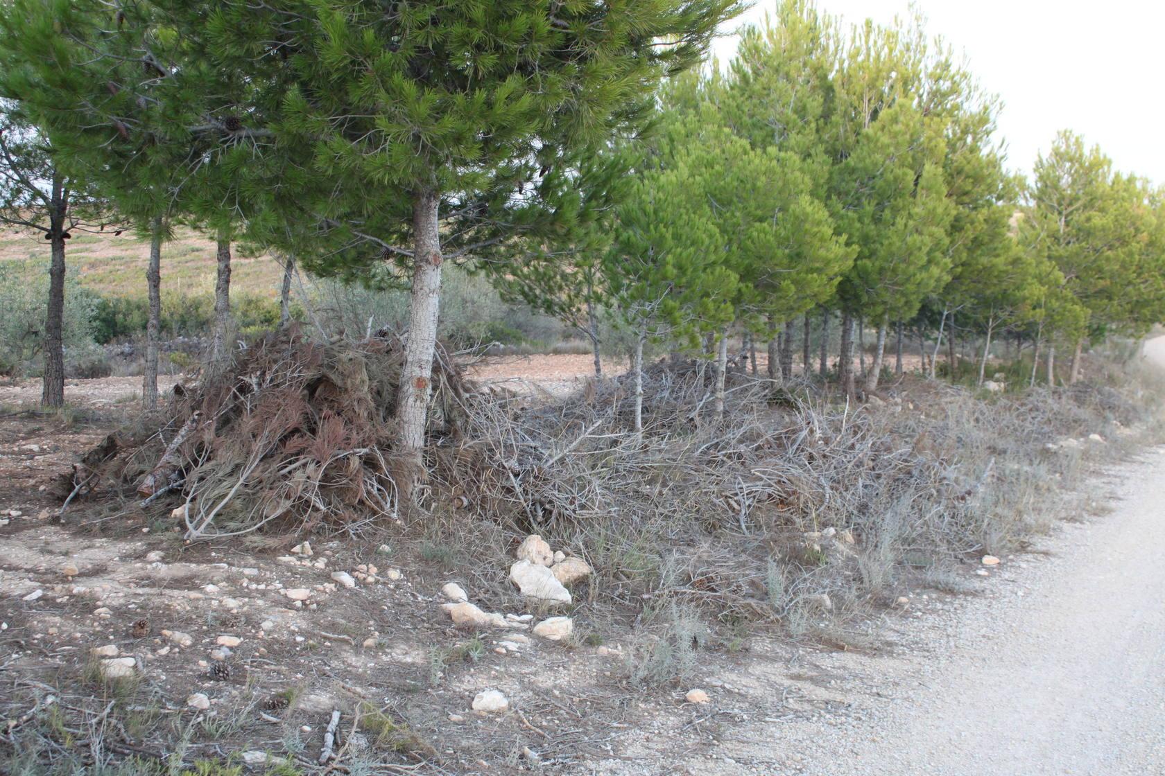 Restos de poda abandonados convierten el monte valenciano en un polvorín